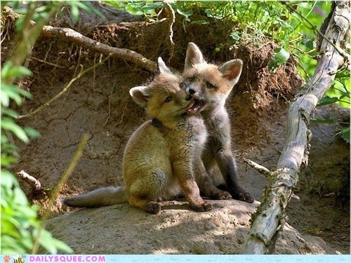 foxes got your nose - 7454241024