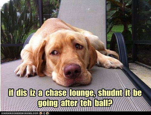 if dis iz a chase lounge, shudnt it be going after teh ball?