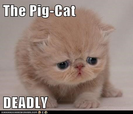 The Pig-Cat  DEADLY