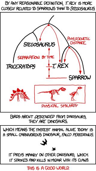birds dinosaur stegosaurus funny t rex - 7455549952