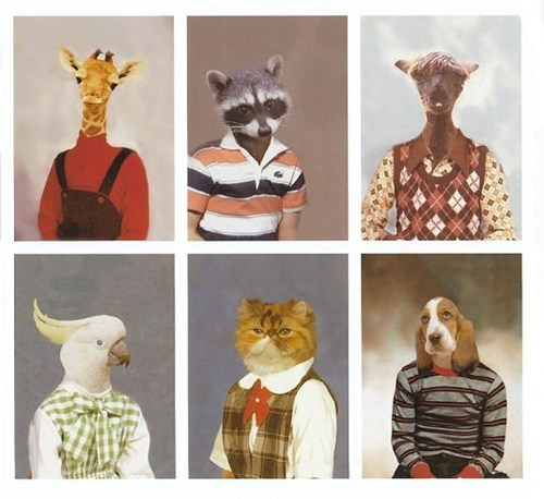school photo funny animals - 7455684096