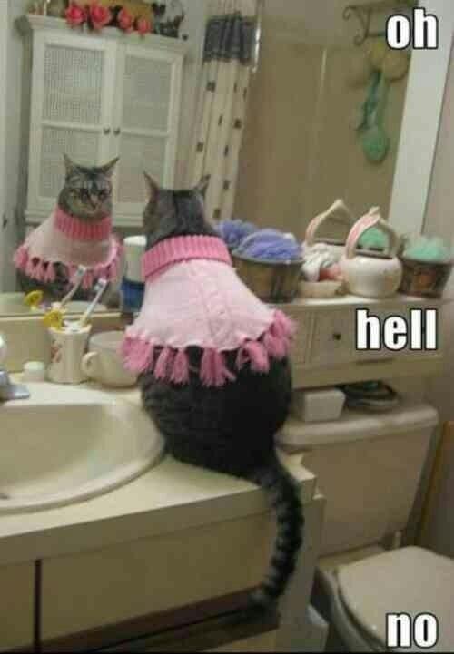 lolcat pets Cats funny - 7455724032