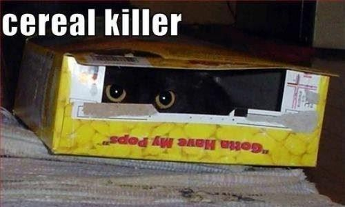 serial killer pun funny cereal - 7455733248
