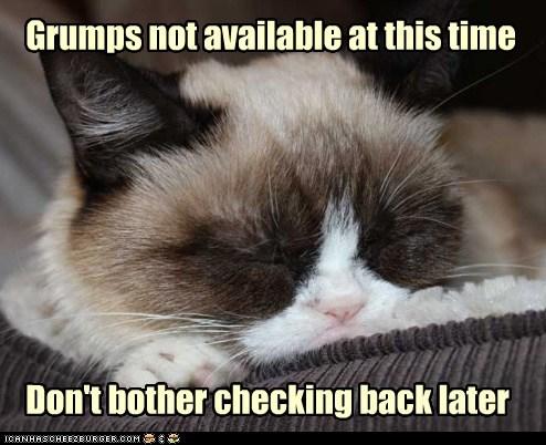 Grumpy Cat nap funny - 7456055808