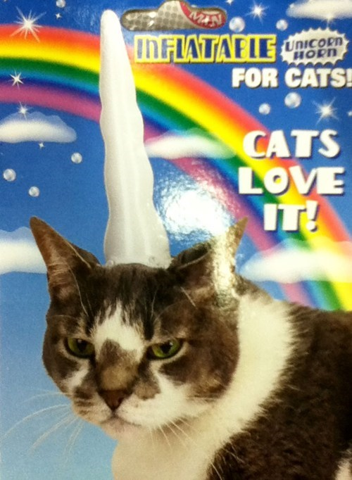 unicorn horn love it Cats funny - 7456056064