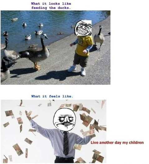 geese me gusta breadcrumbs ducks feeding the ducks funny - 7456061440