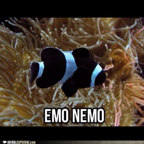Movie,emo,finding nemo,funny