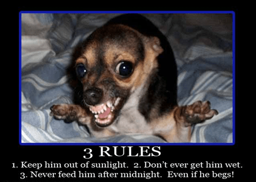 mogwai angry gremlin dogs funny - 7456257280