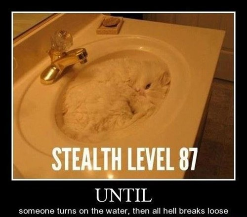 stealth cat water sink hidden funny