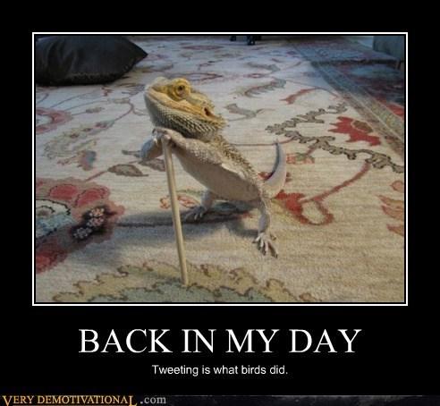 twitter birds cane lizard funny - 7456697088
