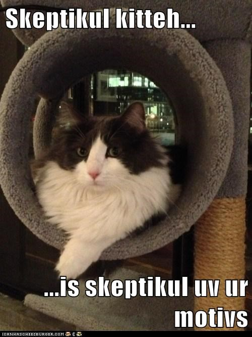 Skeptikul kitteh...  ...is skeptikul uv ur motivs