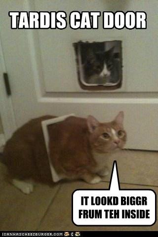 TARDIS CAT DOOR IT LOOKD BIGGR FRUM TEH INSIDE