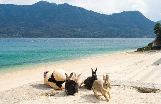 island Japan rabbit Video - 7458309