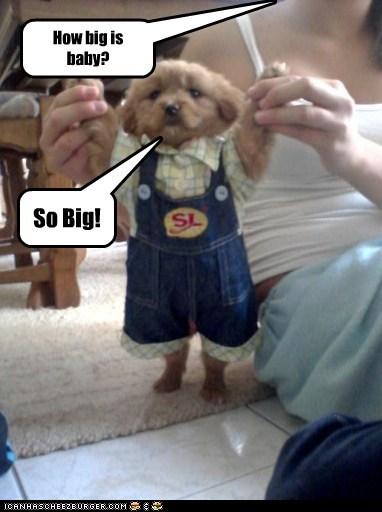 So Big! How big is baby?