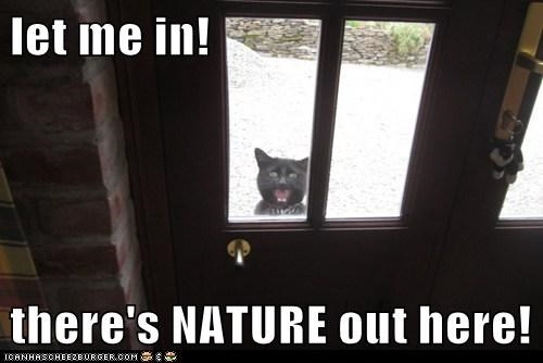 nature,outside,funny
