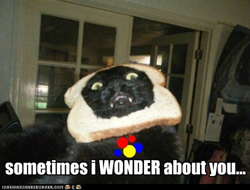 breading pun wonder bread - 7459235584