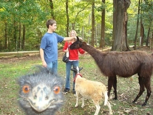 photobomb funny animals - 7459325440