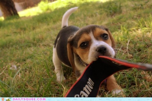 tug of war,puppy,camera