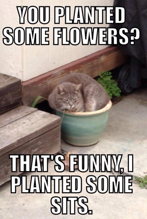 flowers,sit,plant,funny
