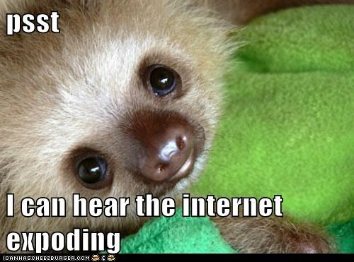 cute squee funny sloth - 7459710464