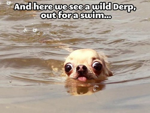 dogs swimming funny derp animals - 7459770880