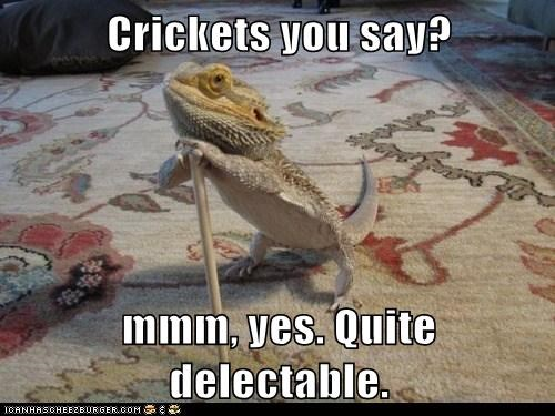 Crickets you say?  mmm, yes. Quite delectable.