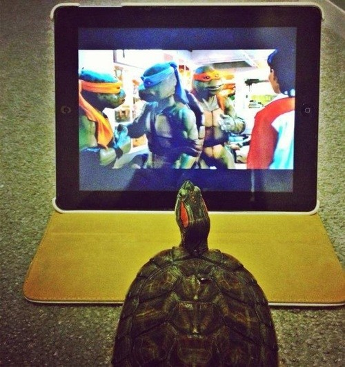 teenage mutant ninja turtles wtf turtles funny - 7459839488