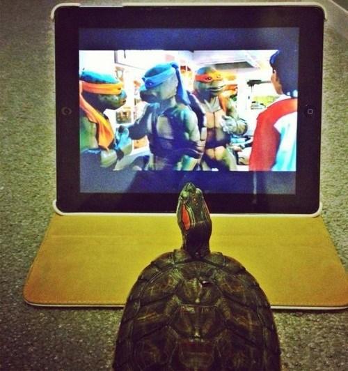 teenage mutant ninja turtles wtf turtles funny - 7459839488