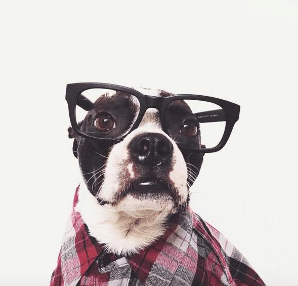 dogs instagram - 745989