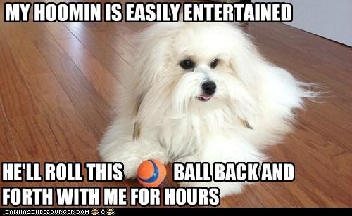 fetch ball funny - 7460190720