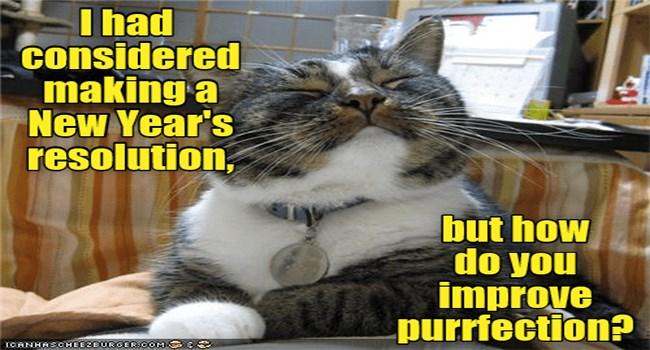 funny cat memes lolcats adorable funny cats Cats funny cat memes - 7460357