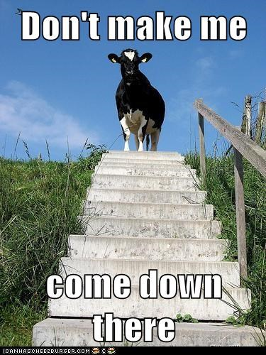 cow,stairs
