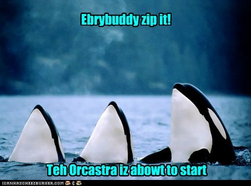 pun,killer whales,funny,orca