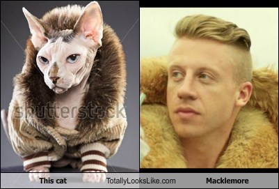 Macklemore,totally looks like,Cats,funny