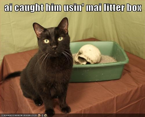 ai caught him usin' mai litter box