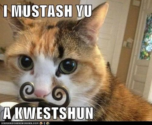 I MUSTASH YU A KWESTSHUN