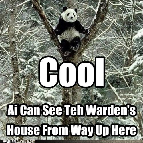 panda,tree,warden,funny