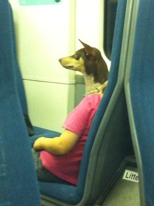 photobomb,dogs,funny