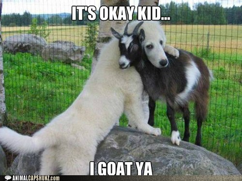 goat pun dogs funny - 7461977856