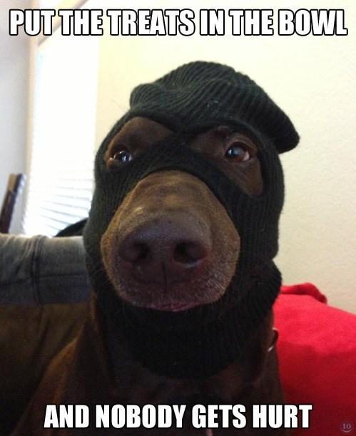 treats robber funny - 7462031616