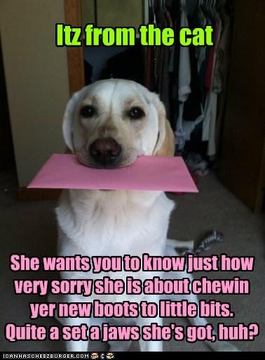 cat blame card funny - 7462059776