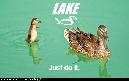 Ad ducks nike funny - 7462085888