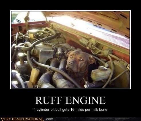 milk bones,pit bull,truck,dogs