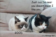 grumpy cat and her brother pokey made to have imaginary conversations