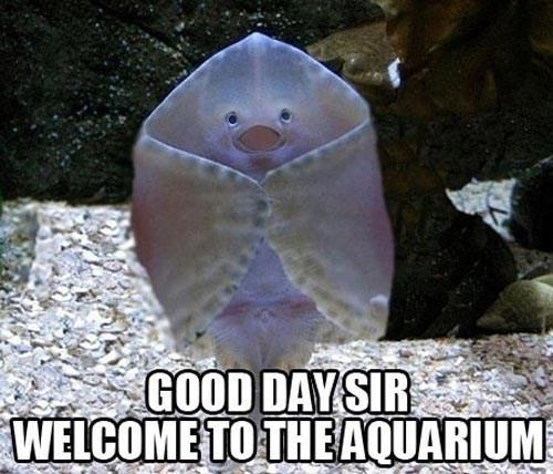 aquarium funny animals - 7462573312