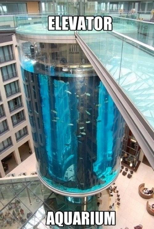 elevators,aquariums,amazing,funny