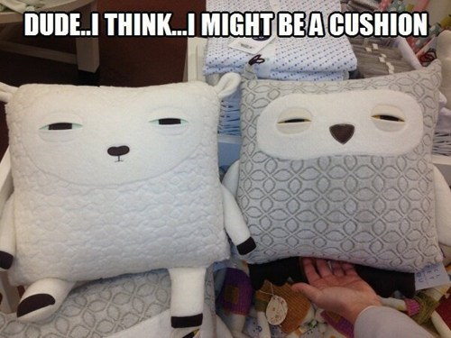 high,cushions,funny