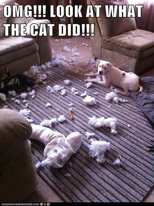 OMG!!! LOOK AT WHAT THE CAT DID!!!