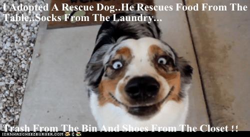 rescue dog funny - 7463022592