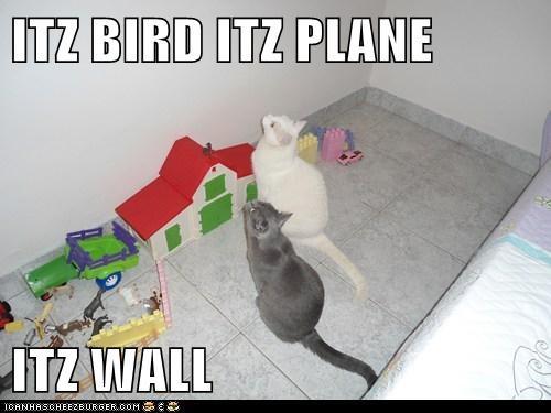 ITZ BIRD ITZ PLANE  ITZ WALL